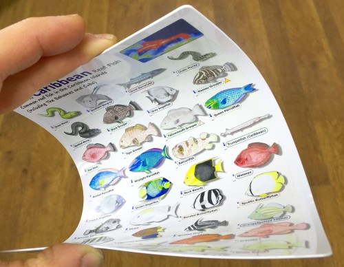 Each fish id slate is printed directly onto tough but very flexible plastic cards - totally waterproof