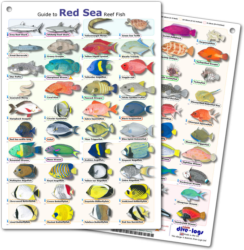 Reef Care Recipes