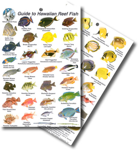 Hawaiian Fish ID Card - waterproof, flexible, and tough - great for scuba diving and snorkelling between dives