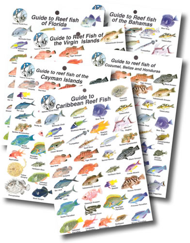 Caribbean Fish ID Card Collection