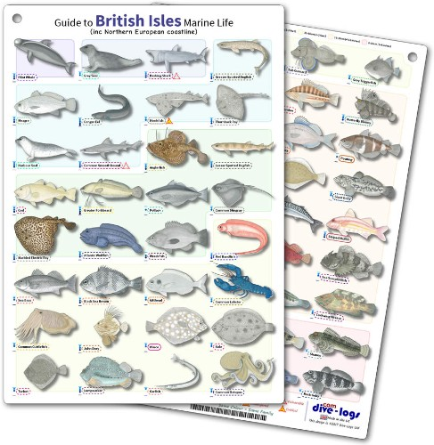 Plastic ID guide to British marine fish life including adjacent waters in Northern Europe