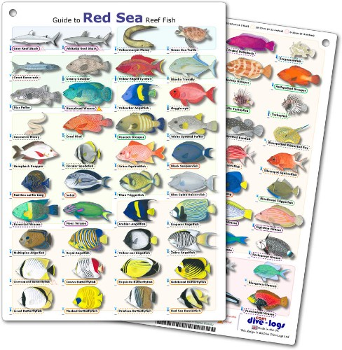 Red Sea Reef Fish ID Card with 60 species - waterproof, tough, and flexible, great for scuba diving encounters and snorkeling between dives
