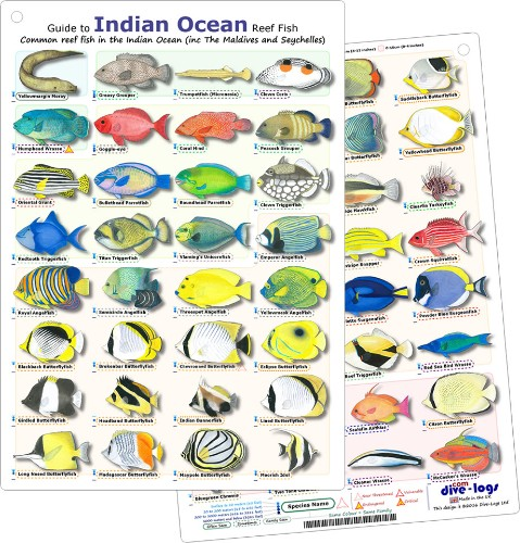 Indian Ocean Reef Fish ID Card, printed with 60 of the most common species - waterproof, tougn, and flexible - great for scuba diving encounters and snorkelling betwen dives.
