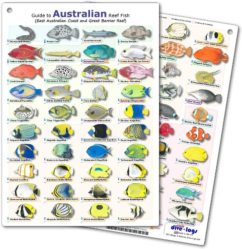 Australia Reef Fish ID Card for the East Australian Coast and Great Barrier Reef - waterproof, tough, and flexible - great for snorkelling between dives or fish encounters underwater