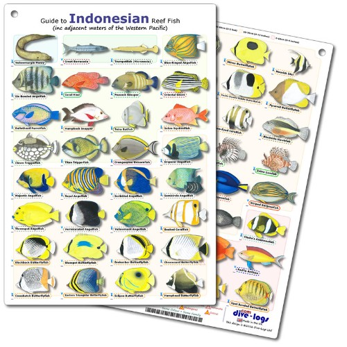 Indonesia and Borneo Fish ID Card - waterproof, tough, and flexible - great for snorkeling and scuba diving fish encounters.