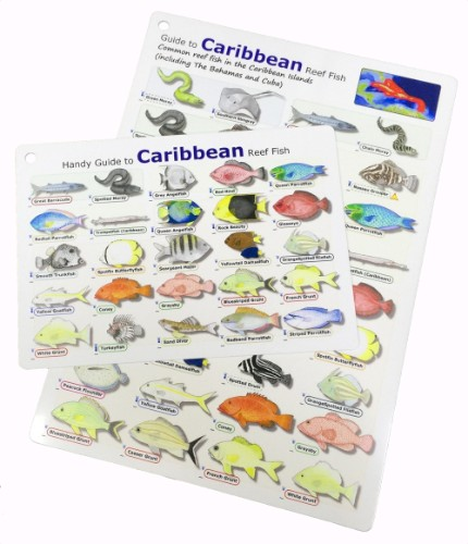 Caribbean Reef Fish ID Card - waterproof, tough, and flexible - great for scuba diving encounters and snorkelling between dives
