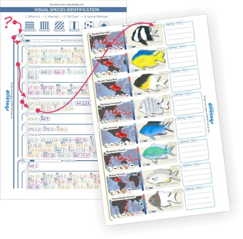 Use the visual species identification chart to narrow down species to look at when trying to identify.